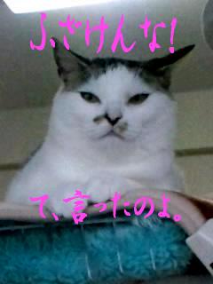 もんち-@神田川9