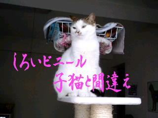 もんち-@神田川10