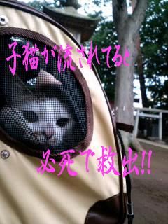 もんち-@神田川5