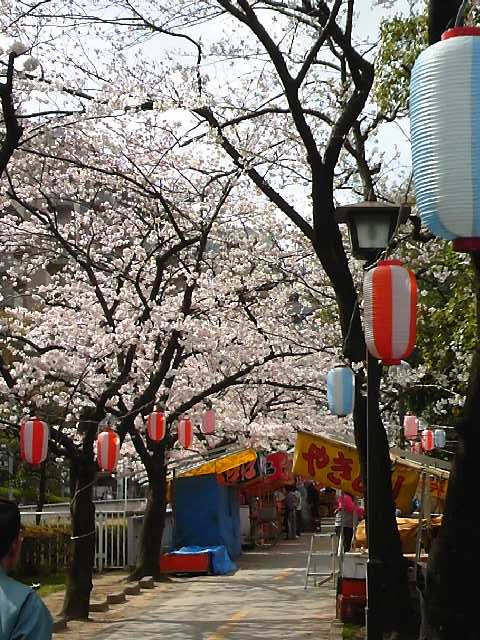仙台堀桜1