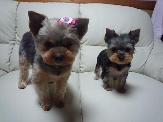 ミニィーとモコ
