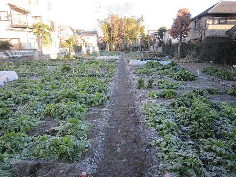 南町市民農園