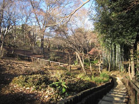 殿ヶ谷戸庭園、崖線