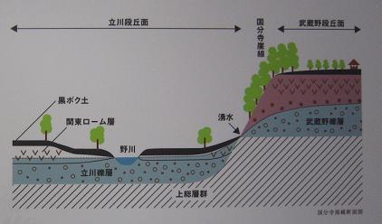 国分寺崖線断面図