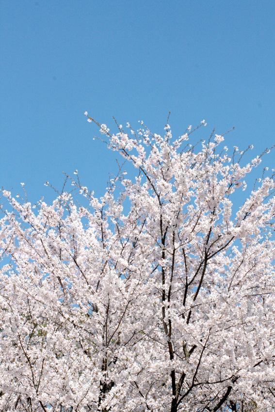 春 001