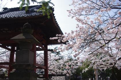 不動尊鐘と桜