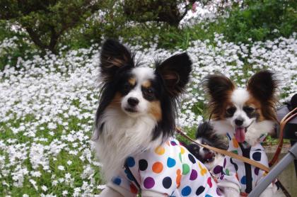 白い花と3匹