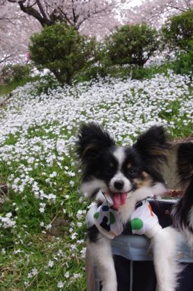 白い花とほたる