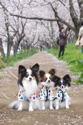 桜並木と3匹