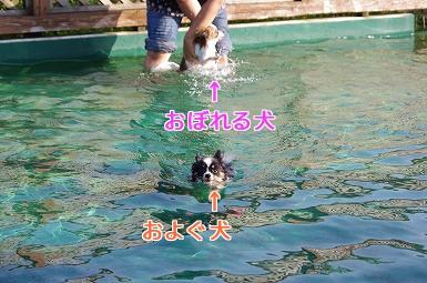ダメみゆき8.29
