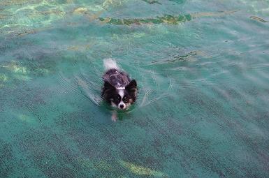 泳ぐほたる8.29