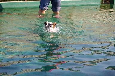 泳ぐみゆき8.29
