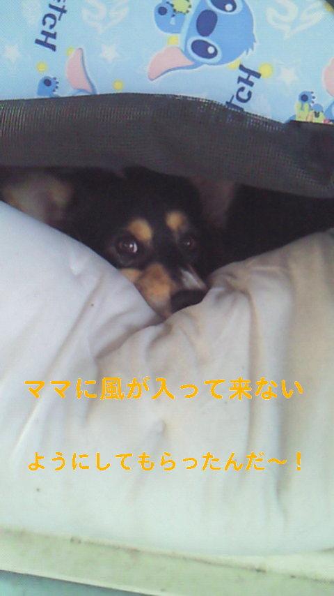 NEC_0532.jpg