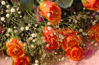 かわいいバラたち♪