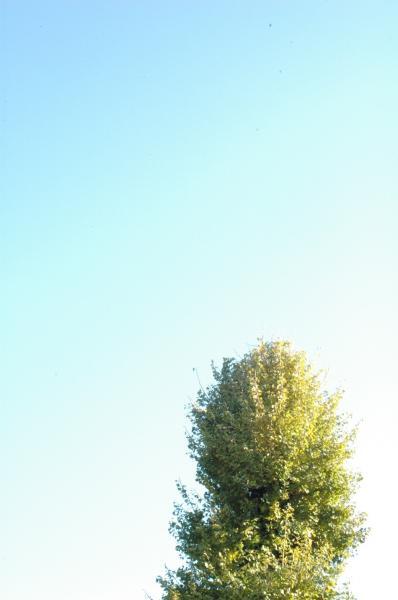 きれいな空でした