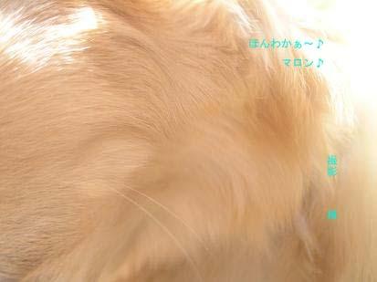 平成21年11月23日マロン2・ほんわかぁ~♪