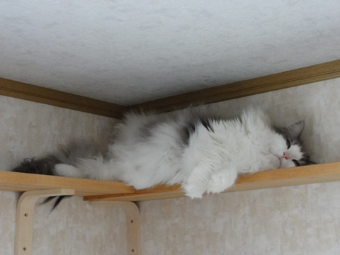 どこで寝てるの?03(2011.05.28)