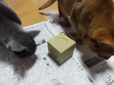 オリーヴ石鹸04(2011.06.01)