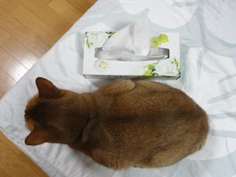 ティッシュ箱と02(2011.06.03)