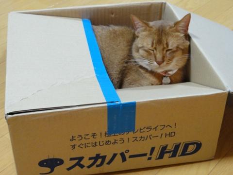 スカパ箱04(2011.06.22)