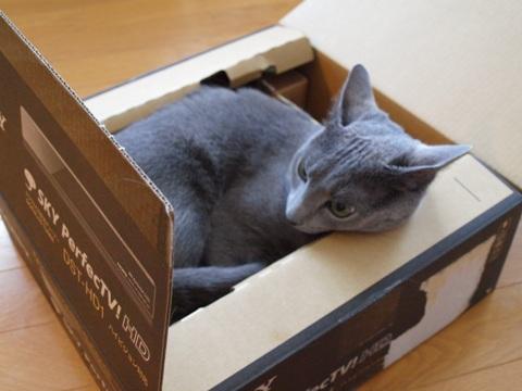 高度な箱06(2011.06.24)