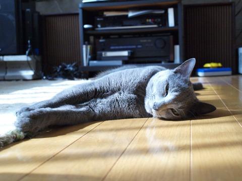 びゅーん02(2011.07.25)