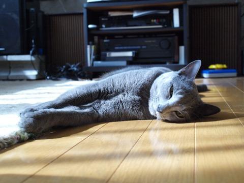 ひよひよひんやり01(2011.07.25)