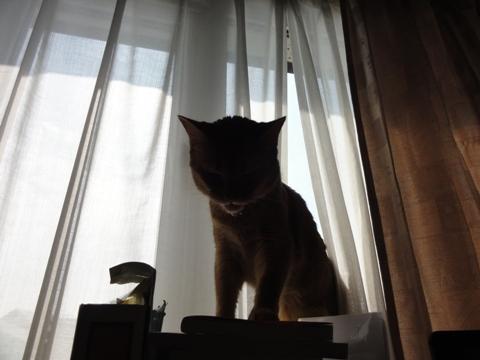 フレーメン嬢03(2011.07.31)