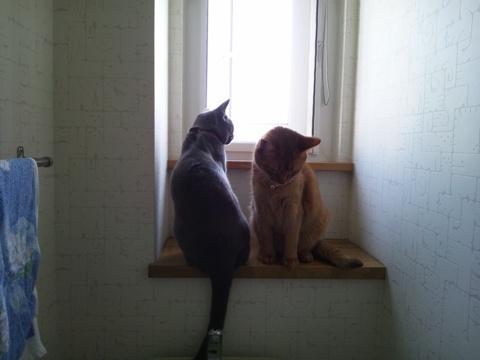 暑い日はトイレで涼む(2011.08.03)