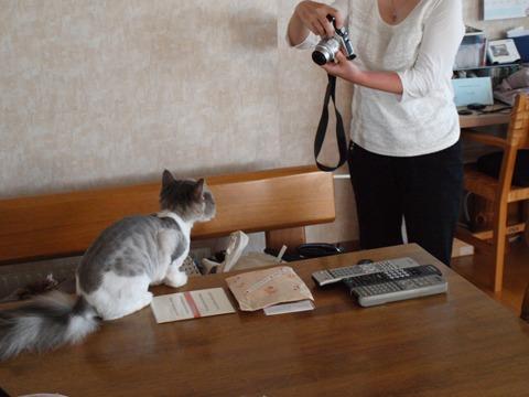 フレイヤちゃんとまろんさん(2011.08.03)