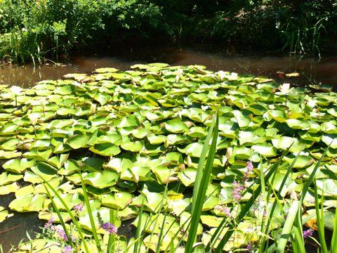 地中の庭06(2011.08.07)