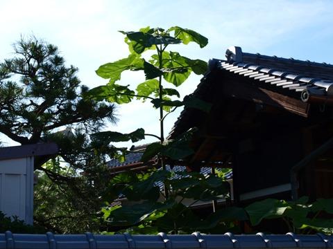 家プロジェクト周辺01(2011.08.07)
