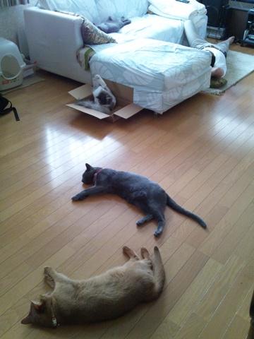 猫様直列(2011.08.10)