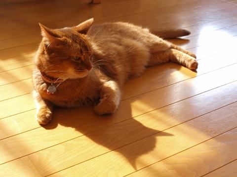 猫神様(2011.08.21)