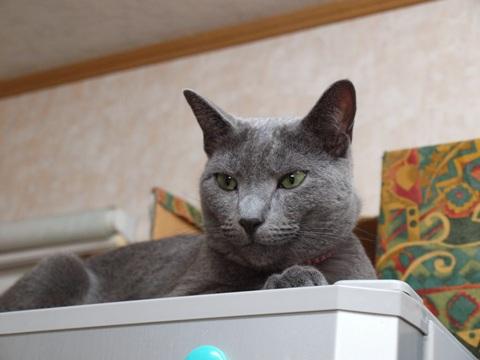 冷蔵庫のアレくん(2011.08.23)