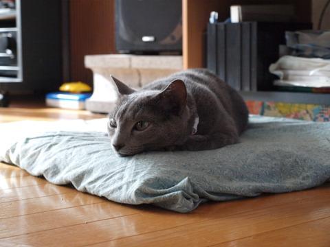 正しいベッド(2011.08.27)