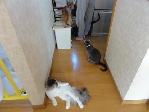 お食事待ち事情02(2011.09.08)
