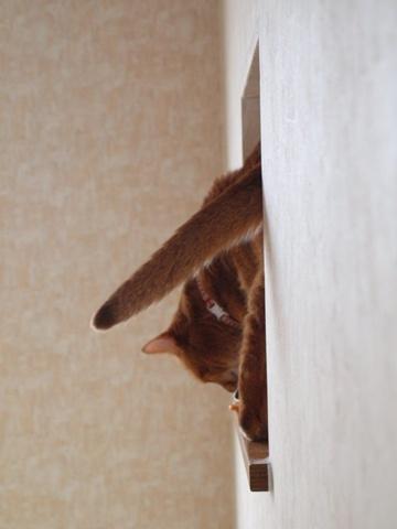 のぞき窓遊び01(2011.09.09)