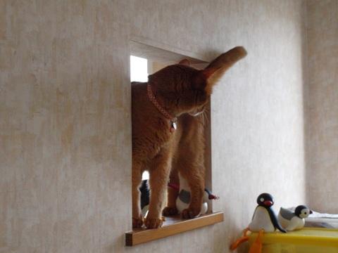 のぞき窓遊び04(2011.09.09)