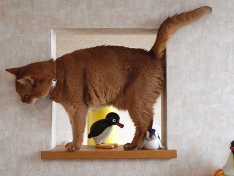 のぞき窓遊び05(2011.09.09)