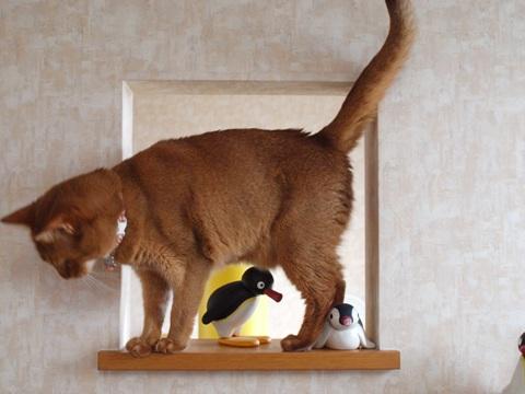 のぞき窓遊び06(2011.09.09)