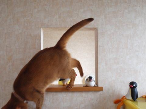 のぞき窓遊び07(2011.09.09)