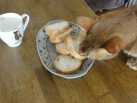パンが好きなのよっ03(2011.09.13)