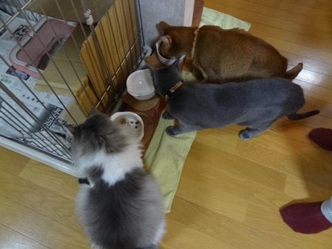お食事風景02(2011.02.21)