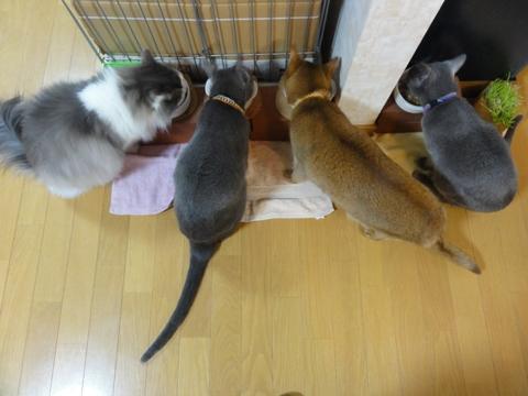 お食事風景01(2011.03.11)
