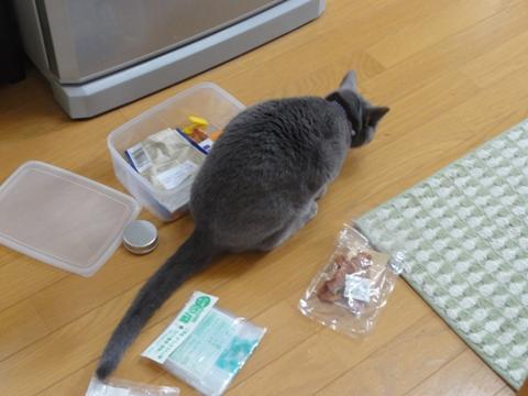 盗み食い事件03(2012.03.24)