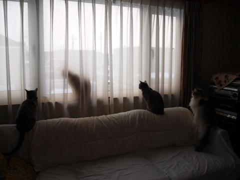 何がいるの?01(2012.03.30)