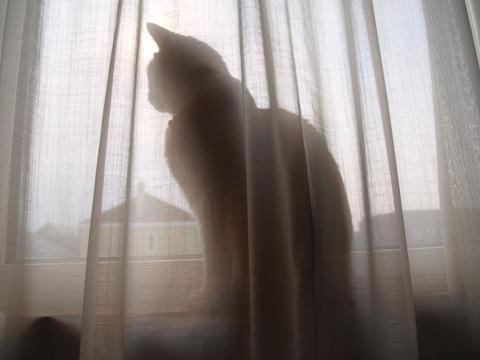 何がいるの?05(2012.03.30)