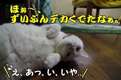 1,初雪玉125
