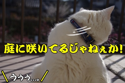 1,スイカツリ11